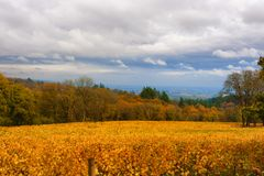 Dundee Hills Vineyards in Oregon. Vineyards autumn colors covers the Dundee rolling hills in Dundee, Oregon Royalty Free Stock Photo