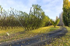 Vineyards in autumn colors Royalty Free Stock Photography