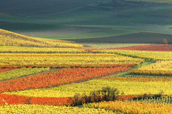 Vineyards in autumn colors. Germany Royalty Free Stock Photo