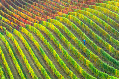 Vineyards in autumn colors. Piemonte, Italy Stock Photos