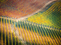 Vineyards in autumn. Colourful vineyards in fall, with red, orange, yellow and green colour palette. Image taken in Langhe region, Italy, where the famous Barolo Stock Photography