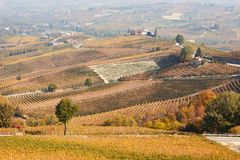 Vineyards in autumn and hills landscape in Barolo, Italy Royalty Free Stock Photo