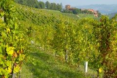 Vineyards in autumn. Autumn landscape with vineyards in Monferrato, Piedmont, Italy stock photos