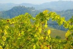 Vineyards in autumn. Autumn landscape with vineyards in Monferrato, Piedmont, Italy stock photo