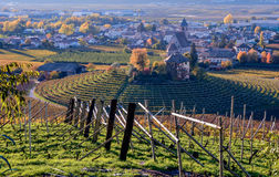 Vineyards in autumn. landscape. Royalty Free Stock Photo