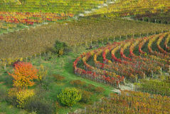 Vineyards in autumn, piedmont, italy Stock Photos