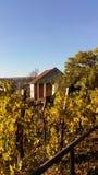 Vineyards in autumn. Prague Visegrad in the Czech Republic Stock Photo