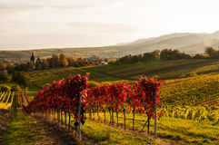 Vineyards in autumn. In Rhenish Pfalz royalty free stock photos