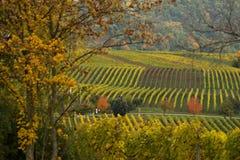 Vineyards in autumn. In Rhenish Pfalz stock photo