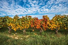 Vineyards in the autumn season, Burgundy, France.  stock photography