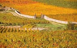 Vineyards in the autumn season, Burgundy, France Royalty Free Stock Image