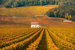 Vineyards in the autumn season, Burgundy, France Stock Images