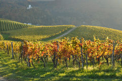 Vineyards in Autumn. Skalce, Slovenia Royalty Free Stock Photo
