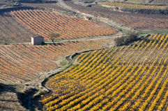 Vineyards In Autumn (Spain) Royalty Free Stock Images