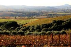 Vineyards in Autumn. In Stellenbosch Western Cape Stock Photos