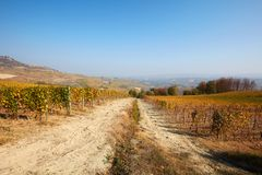 Vineyards in autumn with yellow leaves in a sunny Stock Image
