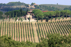 Vineyards of Badia di Passignano, Tuscany, Italy. Vineyards surrounding the ancient Badia di Passignano in Italy owned by the Vallombrosa monks. Its 223 hectares Stock Images