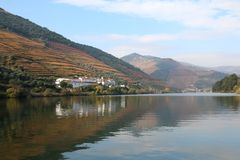 Vineyards on the banks of the River Douro. Vineyards in autumn on the port producing banks of the river Douro. Scenic view of vineyards lining banks of Douro stock photography