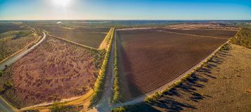 Vineyards of Banrock Station winery in Riverland. Stock Images