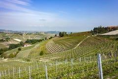 The vineyards of Barbaresco, Piedmont. The splendid vineyards of Barbaresco, in the province of Cuneo in the Italian region of Piedmont. Barbaresco is part of stock images