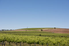Vineyards, Barossa Valley, Australia Royalty Free Stock Photos