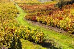 Vineyards of Beaujolais. Rhone-Alpes, France Stock Images
