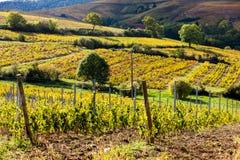 Vineyards, Beaujolais, Rhone-Alpes, France. Vineyards near Odenas, Beaujolais, Rhone-Alpes, France Royalty Free Stock Photos
