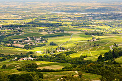 Vineyards of Beaujolais, Rhone, France Stock Photos