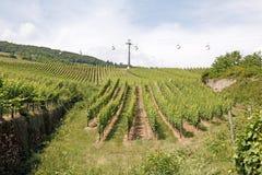 Vineyards, Bernkastel-Kues, Germany royalty free stock image