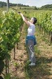 Vineyards. Winery and vineyard at Bernkastel- Kues,Germany Royalty Free Stock Photo