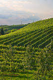 Vineyards in the Black Forest Royalty Free Stock Photos