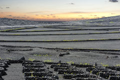 Vineyards at La Geria Valley at sunset, Lanzarote Island, Canary Stock Image