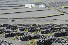 Rock walls of vineyards at La Geria Valley, Lanzarote Island, Ca Stock Image
