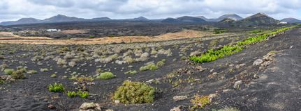 Vineyards on black volcanic soil near Geria in Lanzarote, Spain royalty free stock image