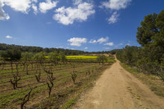 Vineyards and blue sky in spring, ibiza, Spain Stock Image