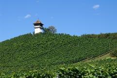 Vineyards on Bodensee. Haltnau vineyards near Meersburg. South Germany Stock Images