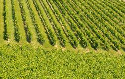 Vineyards in bordeaux Stock Photo