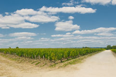 Vineyards in bordeaux Stock Images
