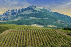 Vineyards at bottom of mountai Royalty Free Stock Image