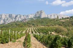 Vineyards at bottom of mountain Stock Image