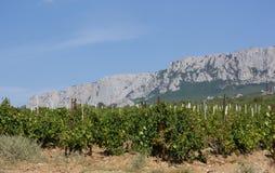 Vineyards at bottom of mountain Stock Photo