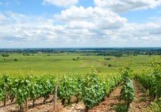 Vineyards of Burgundy Royalty Free Stock Image