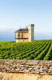 Vineyards, Burgundy, France Royalty Free Stock Images