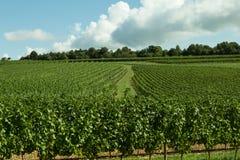 Vineyards, Burgundy, France Stock Images