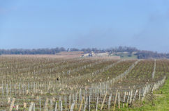 Vineyards in burgundy, Givry, France Stock Photo