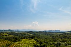 The fields of Friuli Venezia-Giulia cultivated with grapevines. The vineyards of Buttrio in a summer day. Collio Friulano, Udine Province, Friuli Venezia-Giulia royalty free stock photography