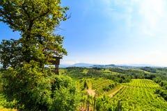 The fields of Friuli Venezia-Giulia cultivated with grapevines. The vineyards of Buttrio in a summer day. Collio Friulano, Udine Province, Friuli Venezia-Giulia royalty free stock photos