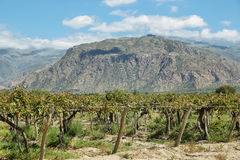 Vineyards in Cafayate, Argentina. Vineyards with fall colors near Cafayate, Argentina stock images