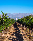 Vineyards in Cafayate. North of Argentina stock image