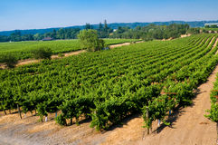 Vineyards in California royalty free stock photography